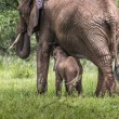 Mother and baby african elephants walking in savannah in the Tar — Stock Photo #63485251