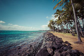 Coconut Palm tree on the sandy beach in Kapaa Hawaii, Kauai — Stock Photo