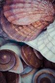 Seashells souvenirs for sale — Stock Photo