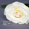 Close up of beautiful white rose flower and wedding rings over g — Stock Photo #68548629