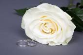 Close up of beautiful white rose flower and wedding rings over g — Stock Photo