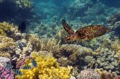 Underwater life of Red sea in Egypt — Stock Photo