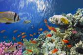 Coral reef with soft and hard corals with exotic fishes — Stock Photo