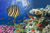 Coral reef with soft and hard corals — Stock Photo