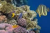 Żółty dotted ryba — Zdjęcie stockowe