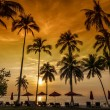 Coconut palms on sand beach in tropic on sunset — Stock Photo #63808467