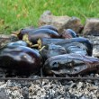 Outdoor fire roasted eggplant — Stock Photo #51889191