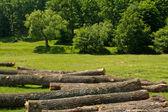 Sustainable forest exploitation — Stock Photo