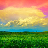 Coutry landscape with green  field — Stock Photo
