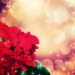 Holiday card with beautiful red rose — Stock Photo #52021473