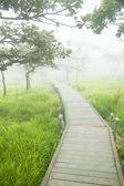 Wooden bridge walkway — Stock Photo