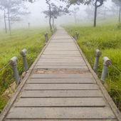 Houten brug wandelpad — Stockfoto