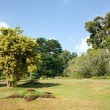 Different kinds of trees in Royal Botanical Gardens, Peradeniya — Stock Photo #58186937