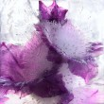 Frozen   flower of   gladiolus — Stock Photo #62516867