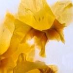 Frozen   flower of   gladiolus — Stock Photo #62520839