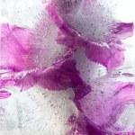 Frozen   flower of   gladiolus — Stock Photo #63322417
