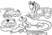 Reptiles and amphibians coloring page — Stock Vector