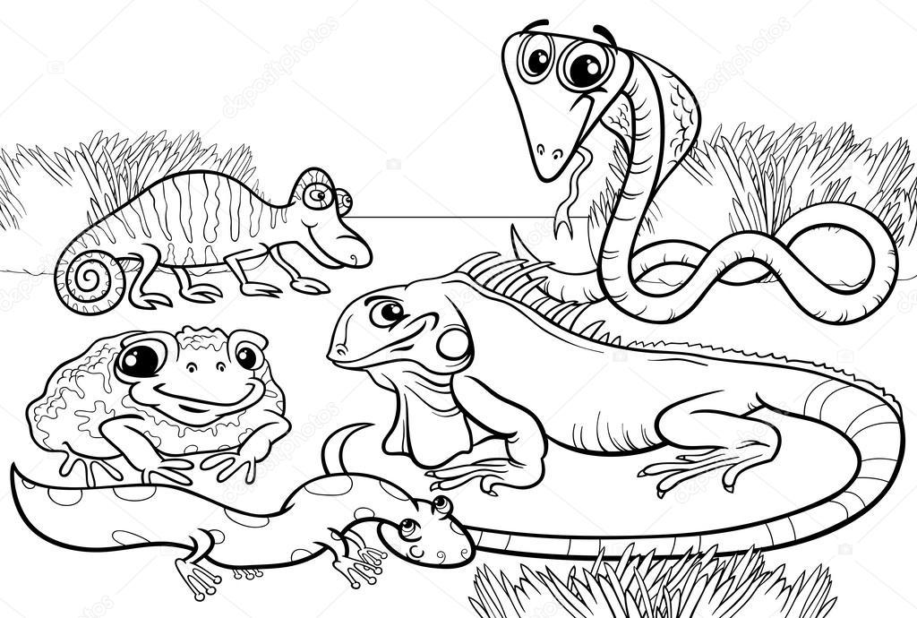 Reptiles y anfibios Página para colorear — Archivo ...