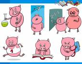 Piglet character student cartoon set — Stock Vector