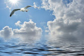 Dream of flying — Stock Photo