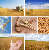 Our daily bread — Stock Photo