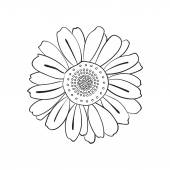 Daisy, doodle style — Stock Vector