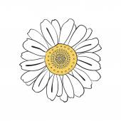 Hand drawn daisy — Stock Vector