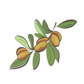 Flat argan fruits on branch — ストックベクタ