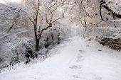 Winter snow-covered road — Stock Photo