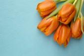 Tulip. — Stock Photo
