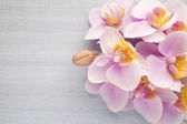 Orquídea. — Foto de Stock