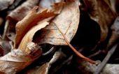 Art foliage — Stock Photo