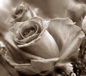 природные розы фон — Стоковое фото