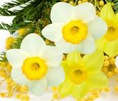 Sztuka kwiat — Zdjęcie stockowe