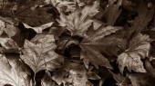 Art foliage — Photo