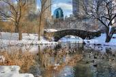 Central Park winter 160 — Foto Stock