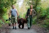 Photographers walk with orangutan.  — Stock Photo