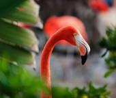 Close up shot of a flamingo profile. — Stock Photo