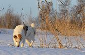 Husky dog picked up — Stock Photo