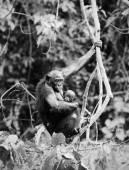 Bonobo with a cub — Stock Photo