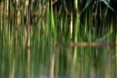 Green plant reflection in the water — Stock Photo