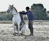 Groom shows White Camargue Horse  — Stock Photo