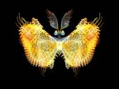 Butterfly Elements — Stock Photo
