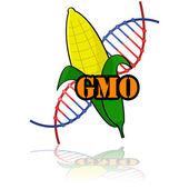 遺伝子組み換えトウモロコシ — ストックベクタ