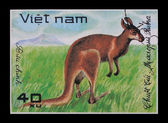 Post stamp. Macropus Rubra — Stock Photo