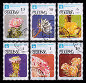 Post stamp. Cactuses — Stockfoto