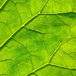 Vector green leaf macro background. EPS 10 — Stock Vector #68987581