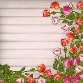 Cartão com rosas. Eps 10 — Vetor de Stock