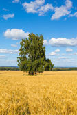 Copyspace Farmland — Stock Photo