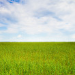 Green fields — Stock Photo #52945337